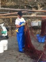 海老網掃除