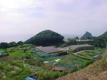 うちの畑から見た景色です。ここで美味しい野菜をつくっているよ!