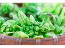 自家菜園では春の風物詩フキノトウも!是非食べにきてくださいね!
