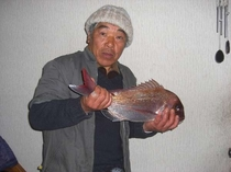 主人自慢の鯛の刺身で食べてもらいました