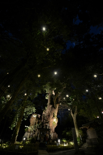 夜の来宮神社④