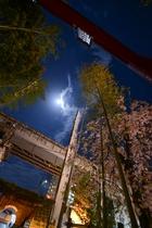 夜の来宮神社