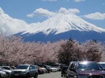 春、河口湖畔からの富士山