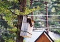 ムササビの巣箱