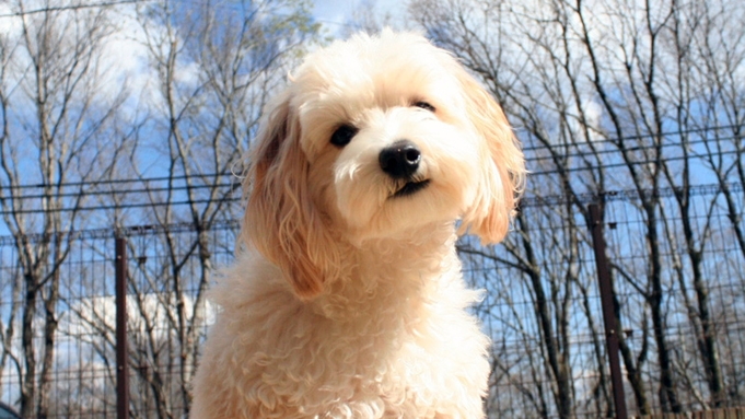 【夏旅セール】愛犬と過ごす贅沢な休日を・・・美食イタリアン×天然温泉を愉しむ ♪