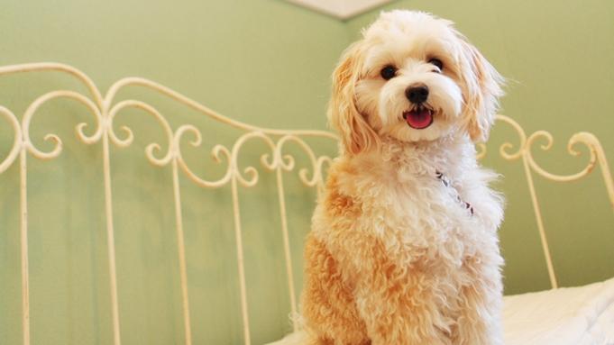 ◎10歳以上の愛犬と一緒に泊まろう♪犬種に関係なく10歳以上の愛犬の同伴料金が無料に≪1泊2食≫