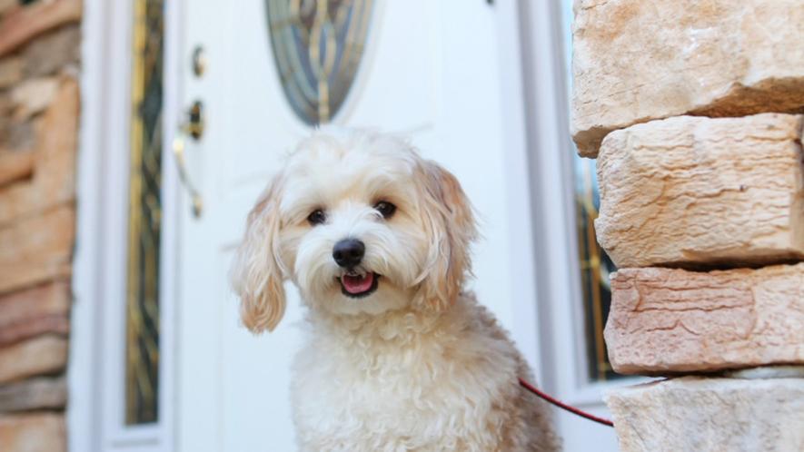 看板犬のテディがみんなのご来館をお待ちしております