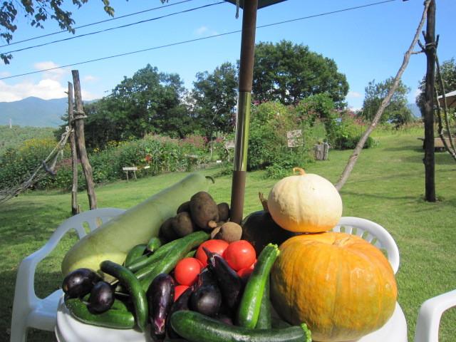 収穫のでっかい秋