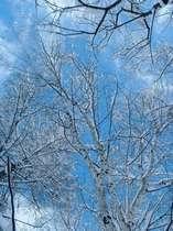 窓の外の木の雪景色です