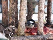 こげらさん野鳥のレストランで食事中