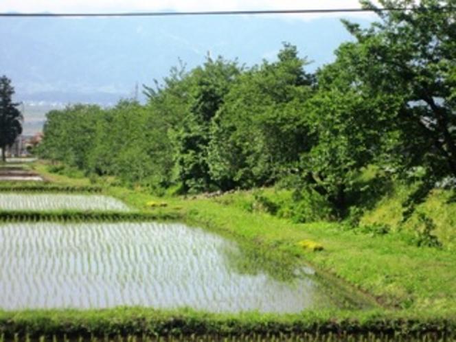 美味しいお米の田園