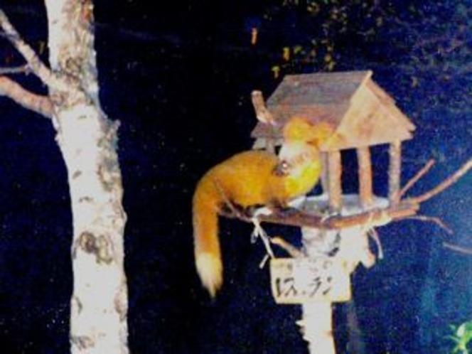 テンくん野鳥のレストランに食事
