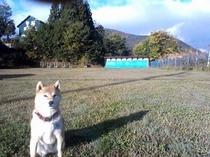 愛犬チョビコ