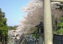 護国神社の桜並木