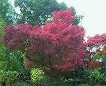 紅葉真っ盛り!