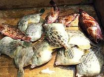 漁師の板前が釣る獲れたての地魚