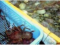 大小3種類の生簀があります。魚とタコの生簀、伊勢海老専用の生簀、貝専用の生簀です