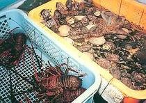 自分で獲って自分でさばく漁師料理