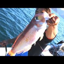 刺し網でかかったアマダイ!漁師が届ける旬の日本海♪