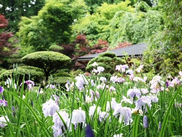 庭園風景(夏)