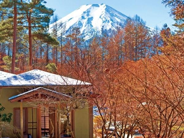 庭園から望む富士山(冬)