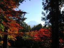 庭園から望む富士山(秋)