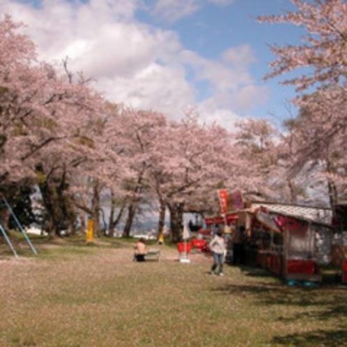 【周辺観光】登米市迫町の鹿ヶ城公園の桜