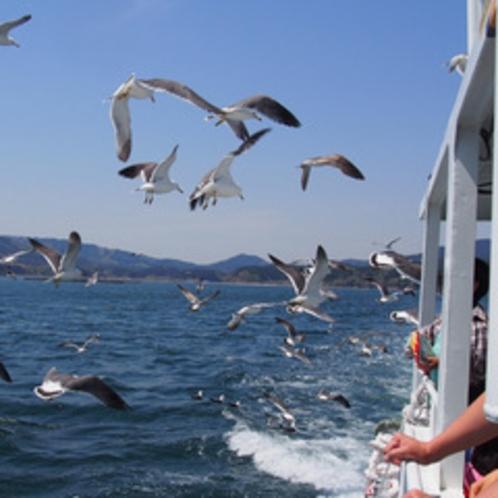 【周辺観光】志津川湾観光船でクルージング!