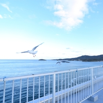 青い海、白い鳥