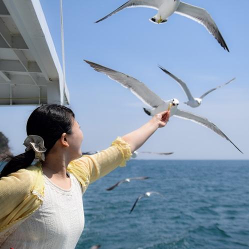 【志津川湾観光船】美しいリアス式海岸美とウミネコ