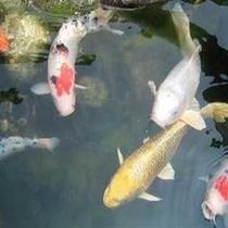 京風庭園池