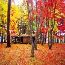香雪園紅葉