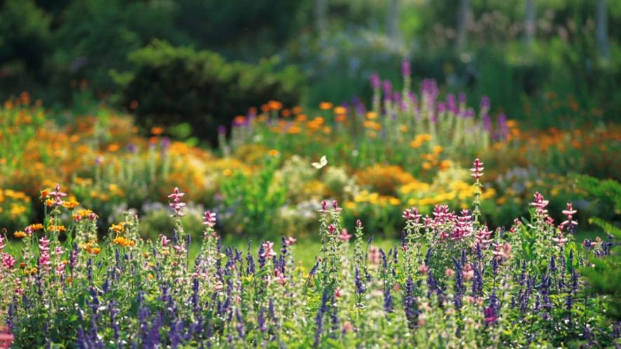 紫竹ガーデン 夏のパレット