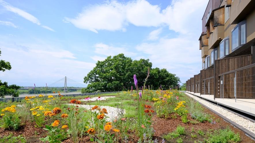 雄大な十勝川の景色と一緒に楽しめる「北海道初の屋上ハーブガーデン」が登場しました。