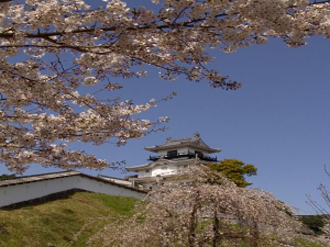 掛川城 桜