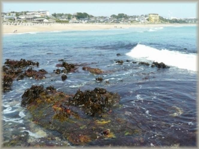 水木浜から見た旅館外観とかじめ(海藻)