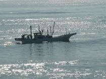 シラス漁と輝く海