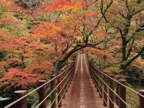 高萩市花貫渓谷の紅葉
