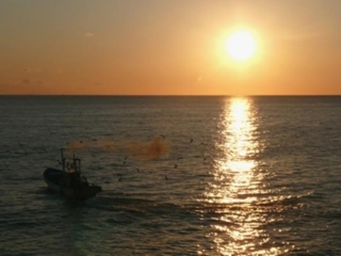 朝日とシラス漁