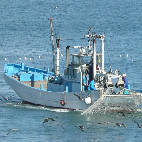 55シラス漁船にまとわりつく海鳥1500ピク