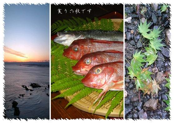 【ファミリー】海まで0分!!秋の旬魚づくし豪華刺し盛り お任せプラン