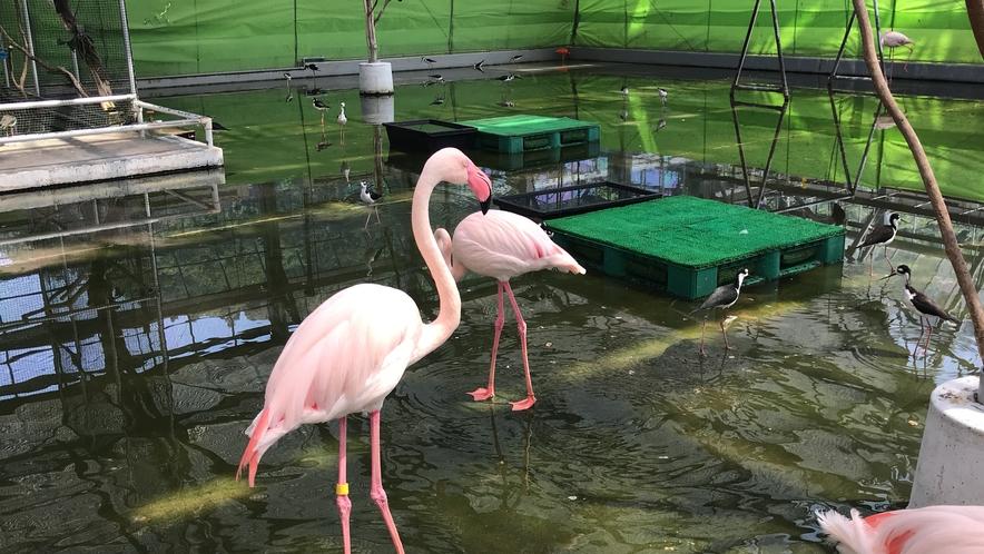 掛川花鳥園3