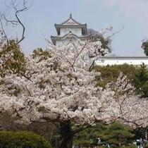 明石城と桜2