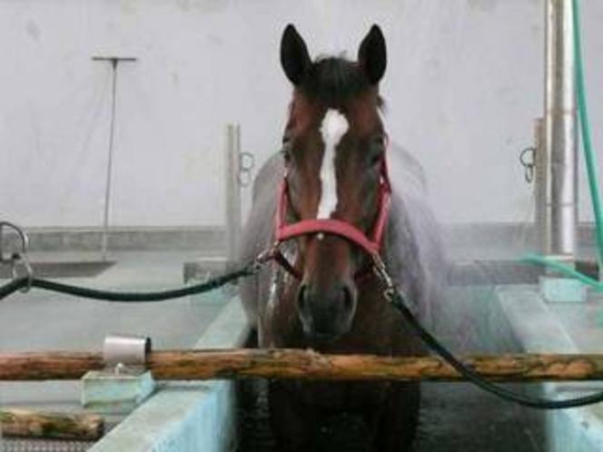 JRA競走馬リハビリテーションセンター(馬の温泉)