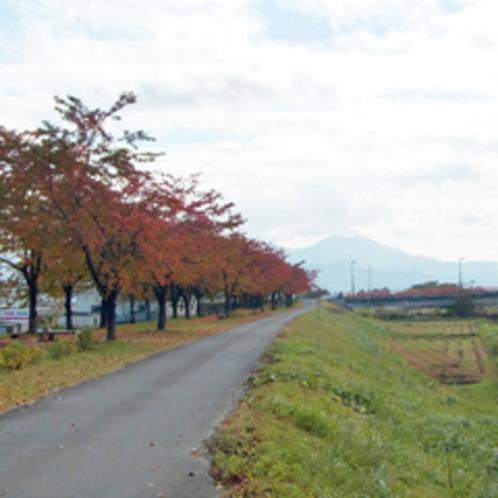 *【周辺(秋)】桜並木の紅葉は、客室・お風呂からもお愉しみいただけます。