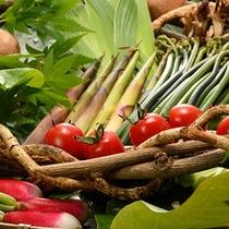 季節の山菜イメージです。