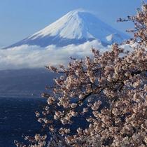 ■戸田港から望む富士④