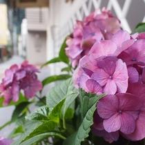 ■山市玄関のあしらい①
