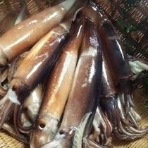 ■新鮮食材 【イカ】
