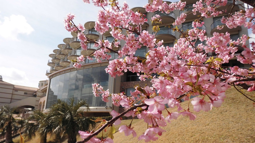 ◆施設外観(河津桜)